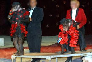 Maxi e Yvan en el circo