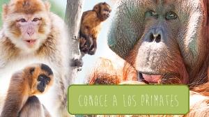 Conoce-primates