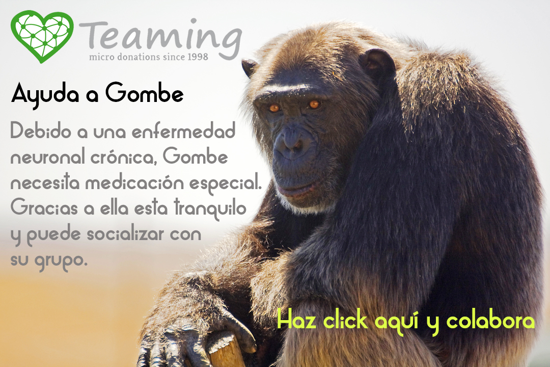 Gombe-Teaming