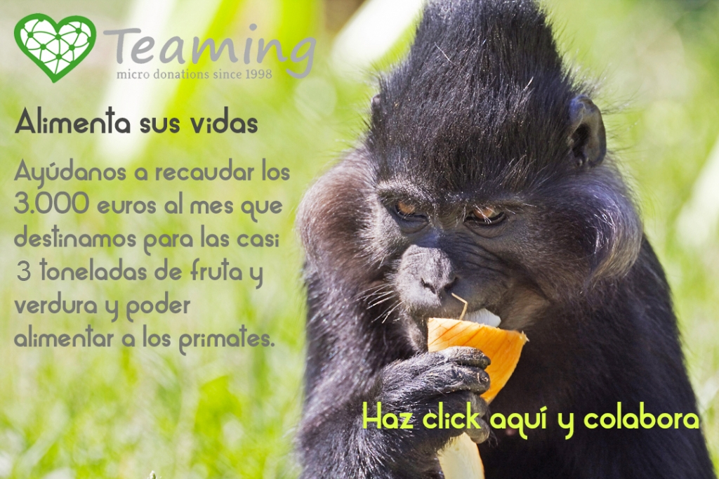 Alimento-Teaming